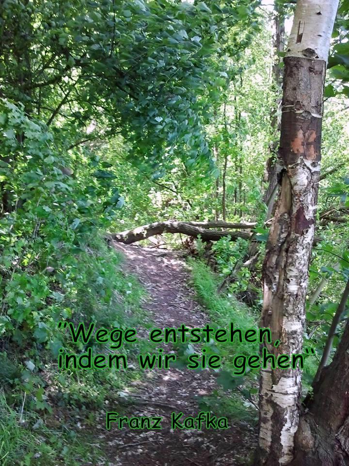 Titelfoto Waldweg Sommer